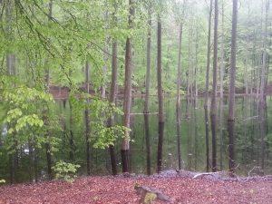Neurologiske sygdomme Sclerose behandling, woods